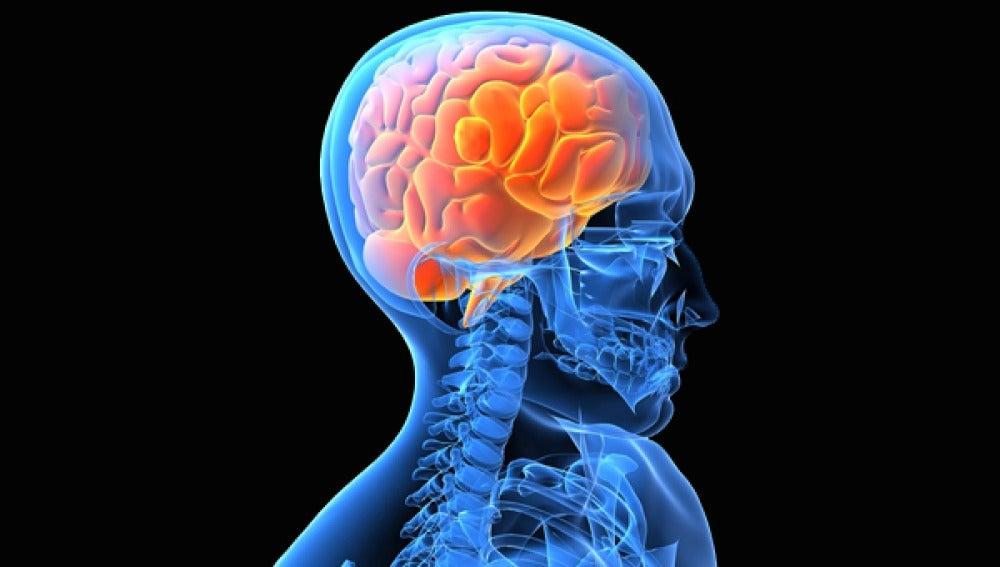 ANTENA 3 TV | Descubren que cada persona tiene una anatomía cerebral ...