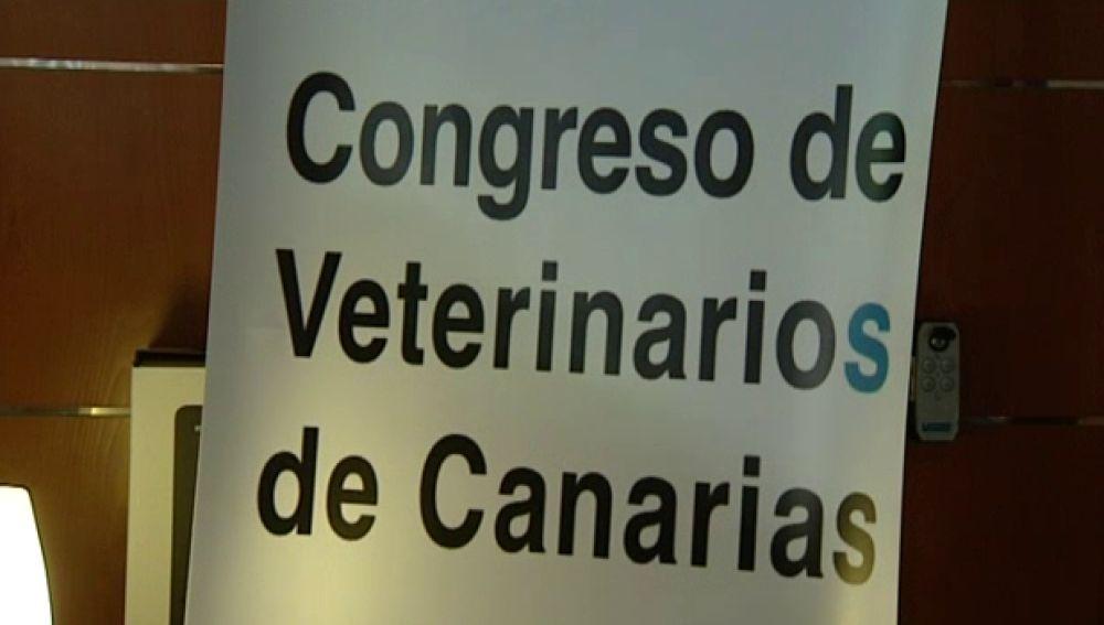 400 veterinarios debaten sobre como mejorar la vida de los animales