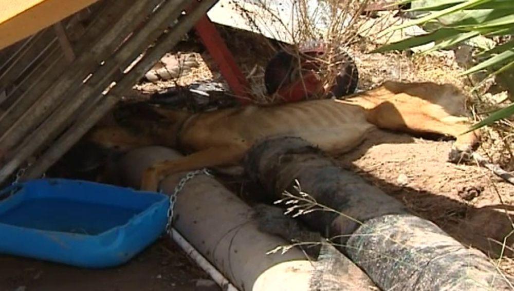 El endurecimiento de las leyes reduce el número de maltratadores de animales