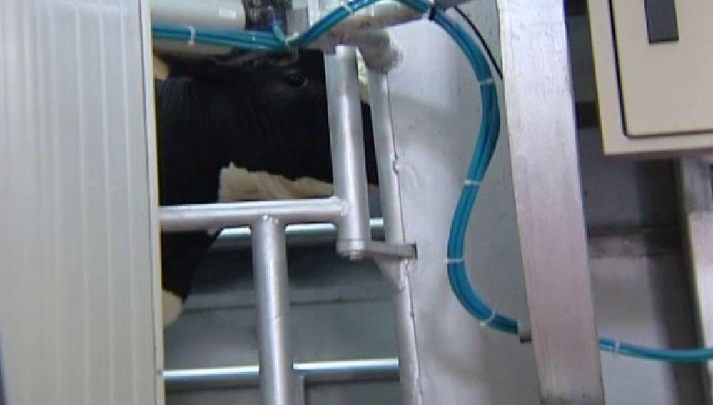 Matanza ilegal de corderos en la fiesta musulmana