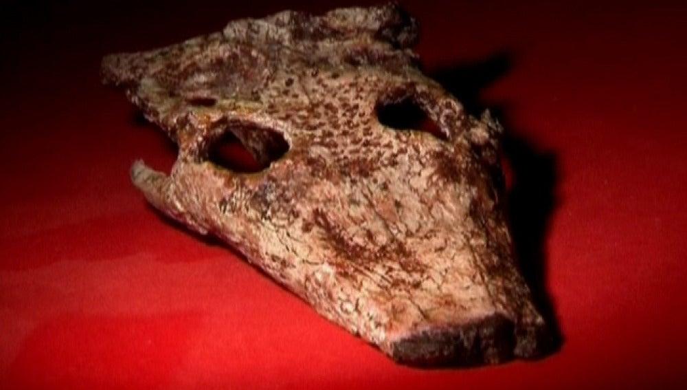 Fósil de cocodrilo
