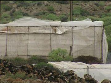La agricultura sufre el embate del viento y la tormenta