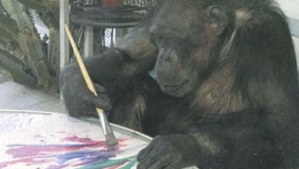 Jimmy, el mono pintor