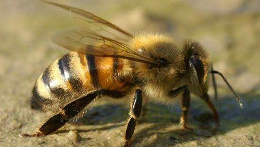 Una abeja en su hábitat