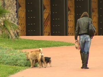 Ya no le multarán si pasea su perro por el Avenida de Las Canteras