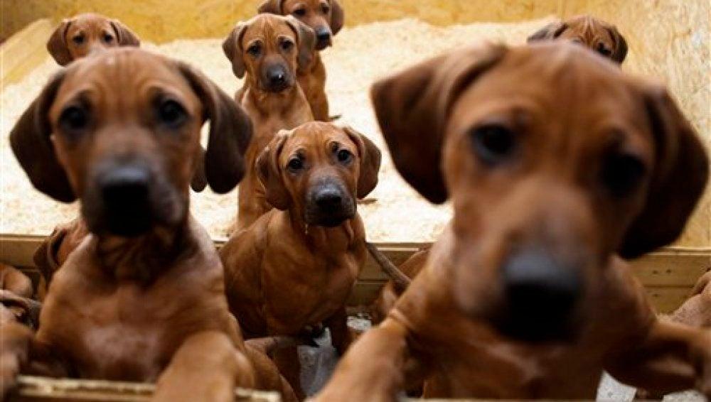 Nacen 17 cachorros