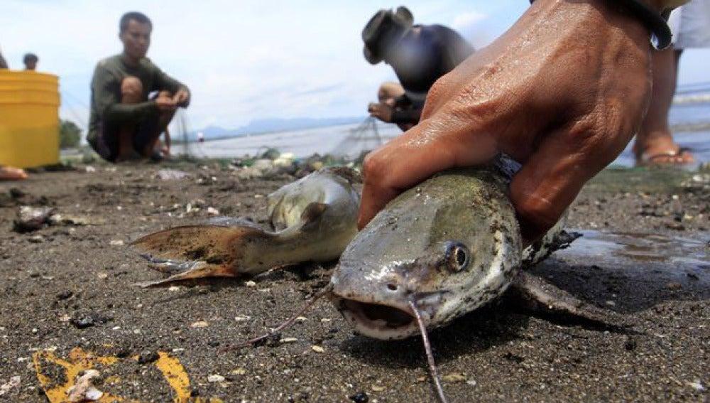 Peces muertos en Maryland