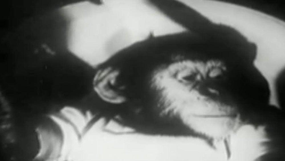 El mono Ham conquistó las estrellas