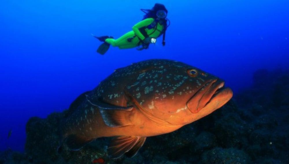 Dan por muerto al pez Pancho