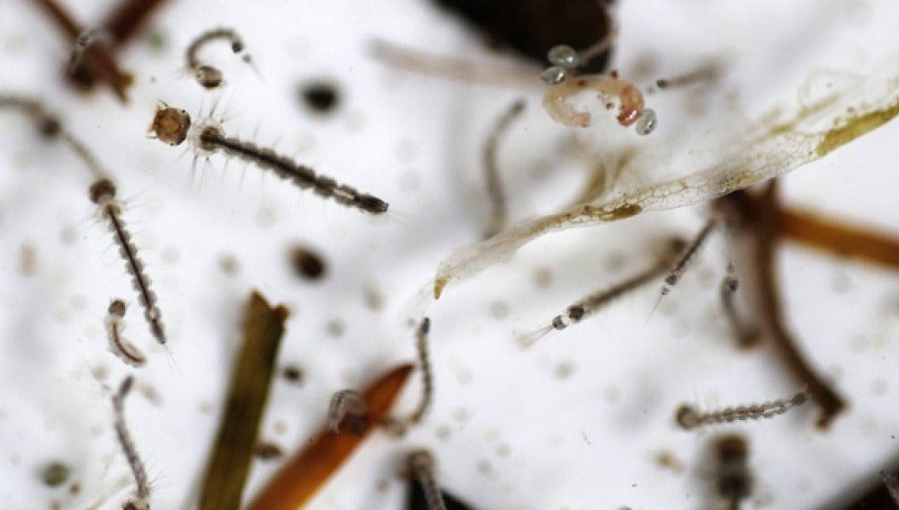 El brote de dengue le ha costado la vida ya a once personas