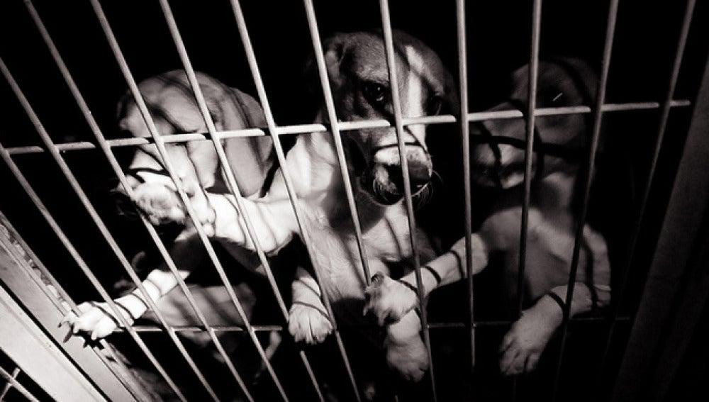 Varios de los perros robados