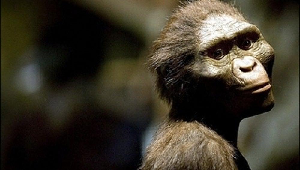 Reconstrucción de Lucy, la Australopitecus más 'famosa'