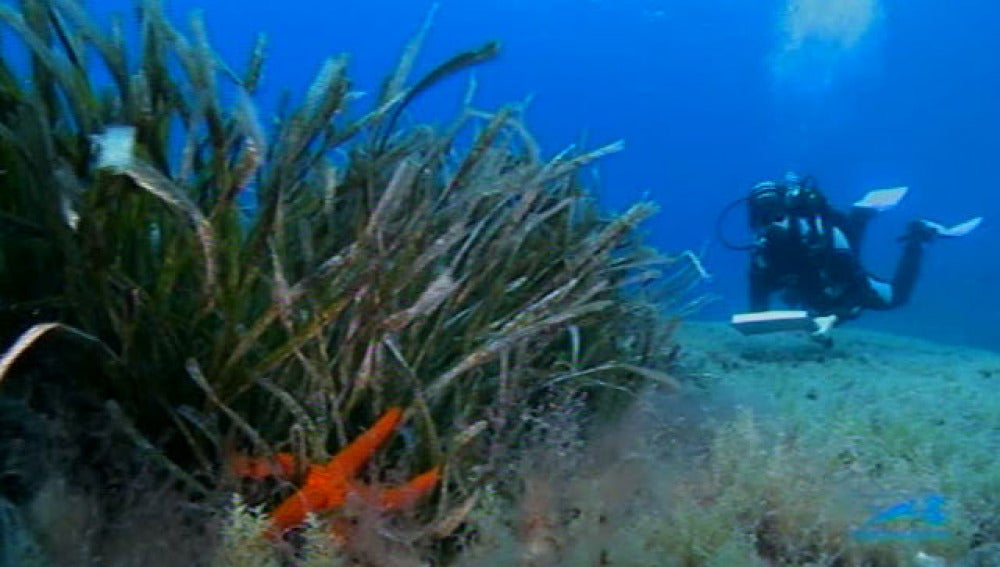 Un buceador recopila información sobre el fondo marino