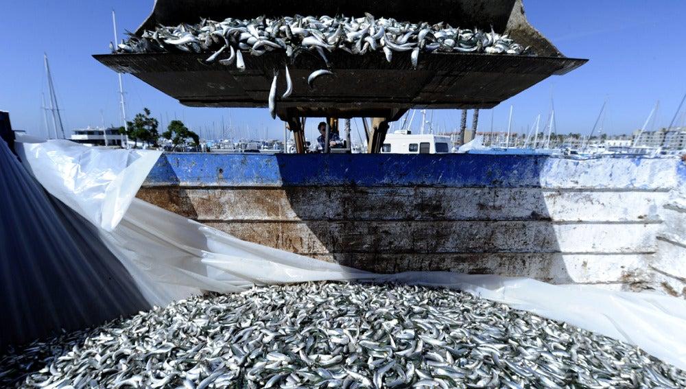 Una pala mecánica deposita los peces muertos en un contenedor