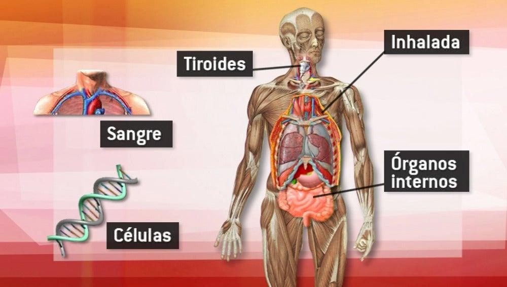 ¿Cómo afecta la radiación?