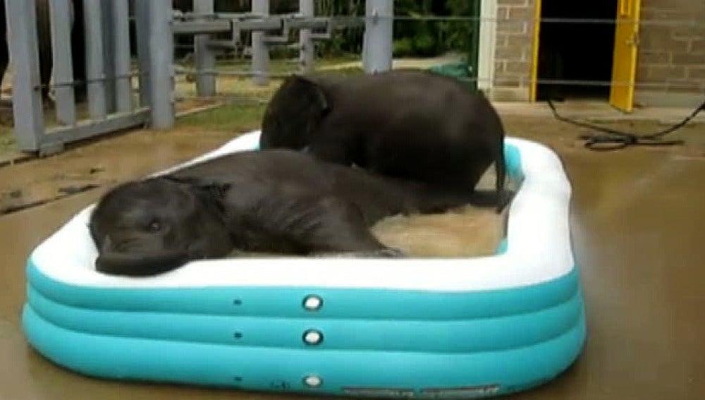Elefantes en la piscina