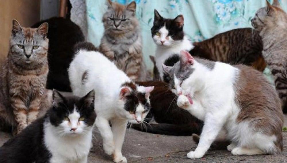 Gatos habitantes de 'La isla de los gatos'