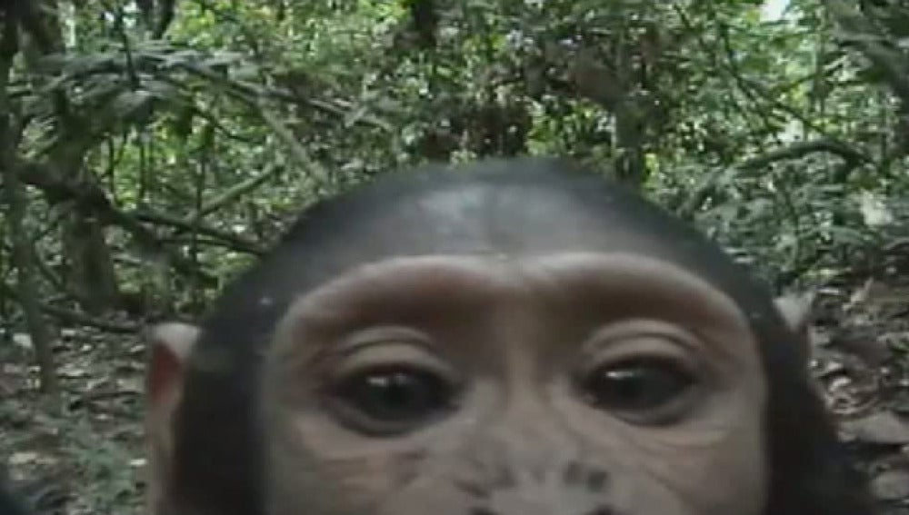 "Animales filmados con cámaras ""ocultas"""