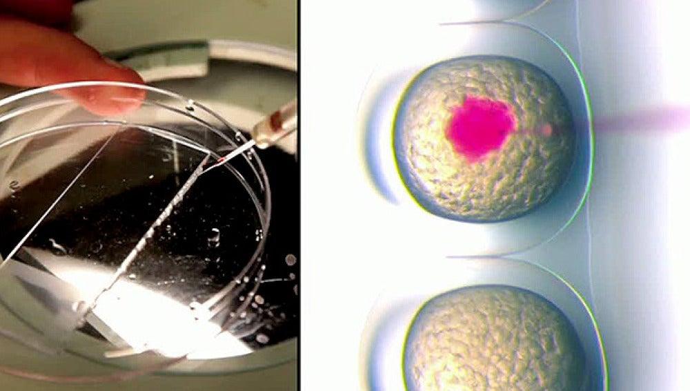 Células en un laboratorio