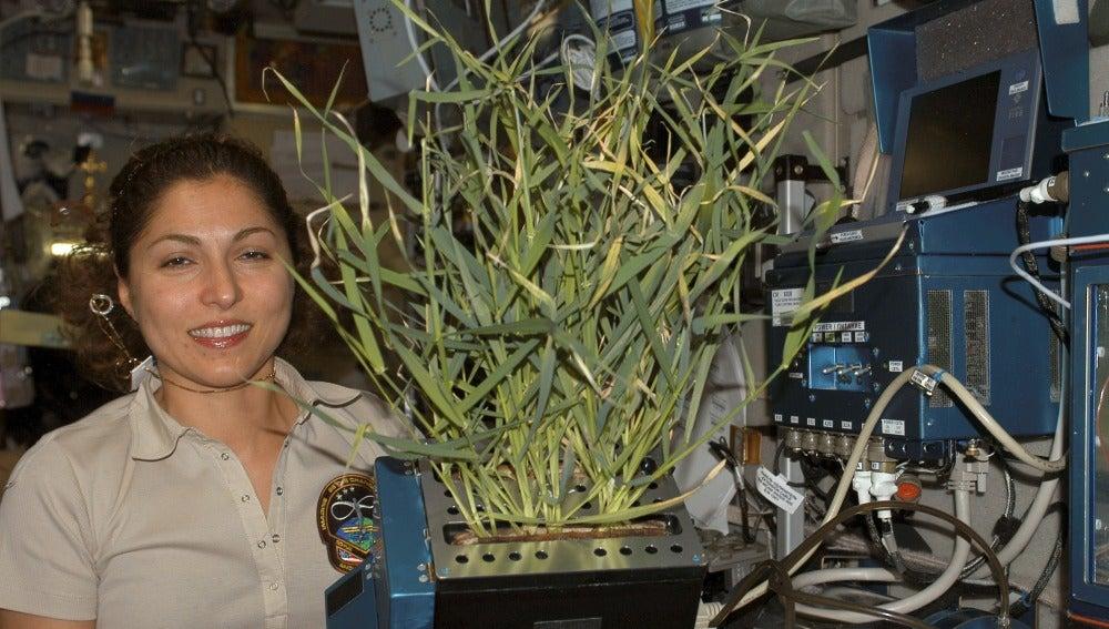 Plantas cultivadas en el invernadero Lada