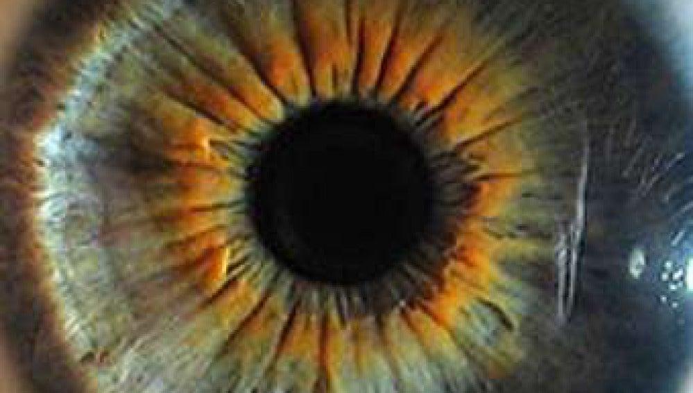 El iris de un ojo