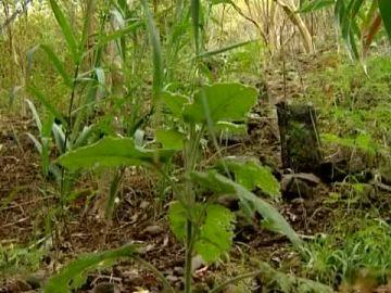 Abrirá al público la Reserva Natural de Los Tilos de Moya