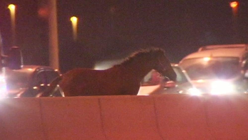 Un caballo en medio de la carretera