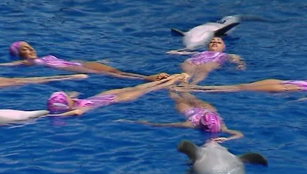 Natación sincronizada con delfines