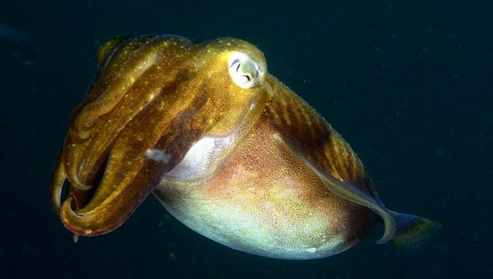 Fotografía submarina en Ferrol
