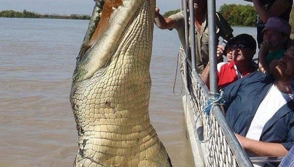 Brutus, el cocodrilo gigante
