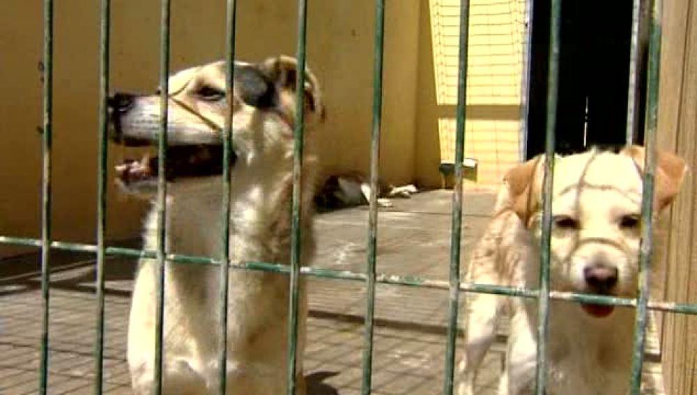 Varios perros en una perrera