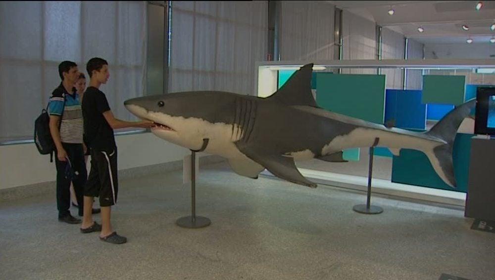 Los tiburones, ¿depredadores o víctimas?