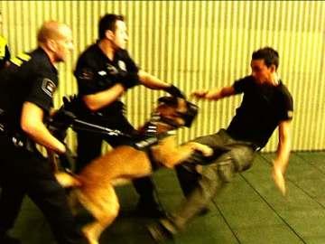 Perros de impacto
