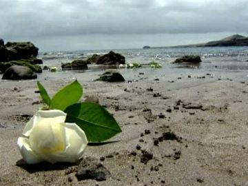 Flores, folias y poemas para recordar a las víctimas