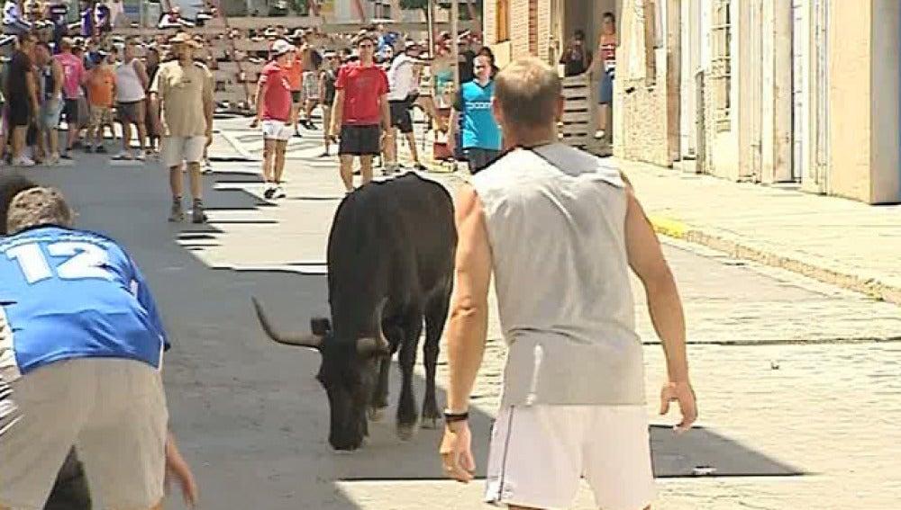 Herido por una vaquilla que se escapó en el encierro de Vilamarxant