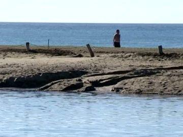 Las mareas del Pino regeneran la flora y fauna de la charca