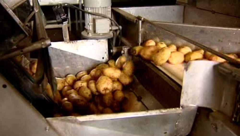 Más de 2 mil kilos de papas esperan para ser vendidas