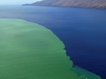 mancha producida por la lava y los gases en aguas del Mar de Las Calmas