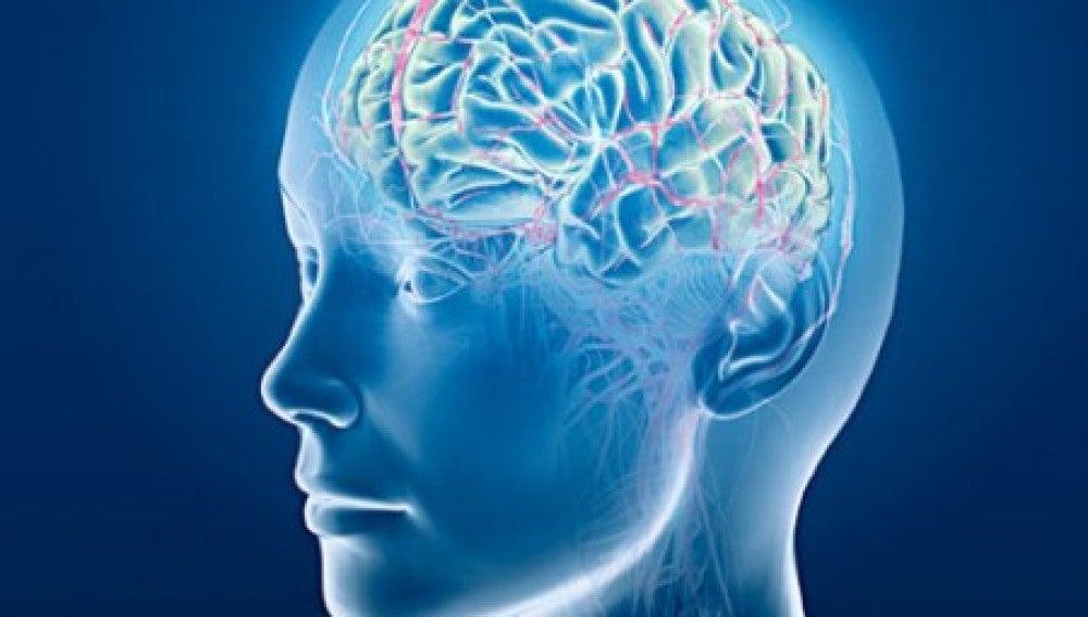 Los cerebros de las personas transexuales muestran diferencias biológicas