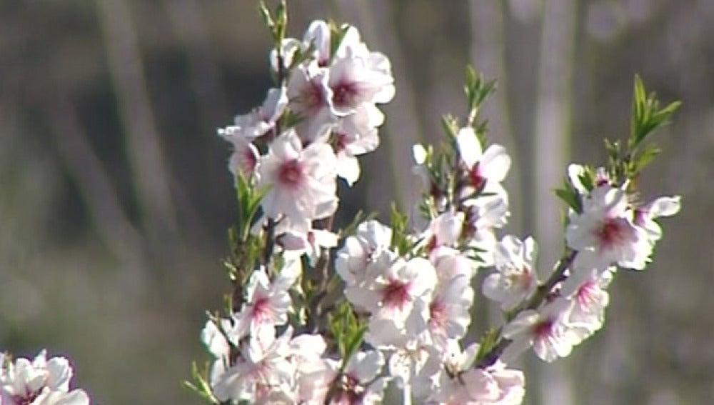 La floración se adelanta por las altas temperaturas