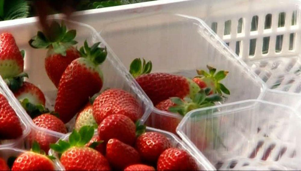 ¡Ya están aquí las fresas!