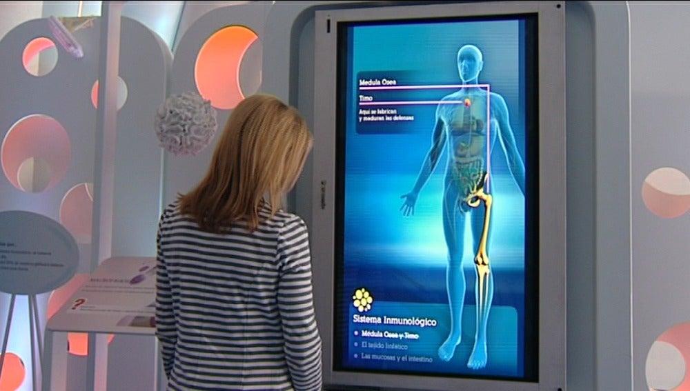 De nuestro sistema inmunitario depende la esperanza de vida