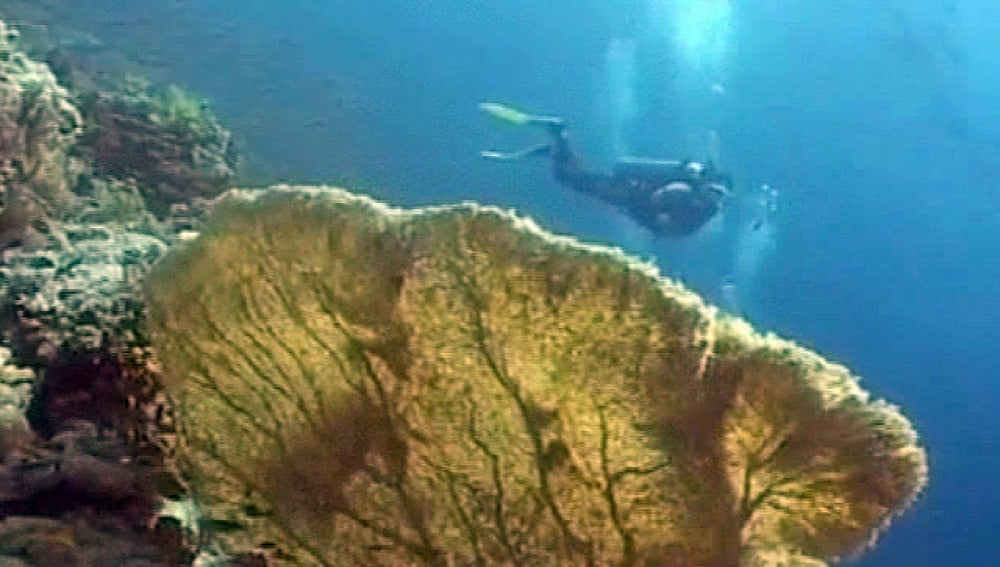 Un buzo haciendo submarinismo