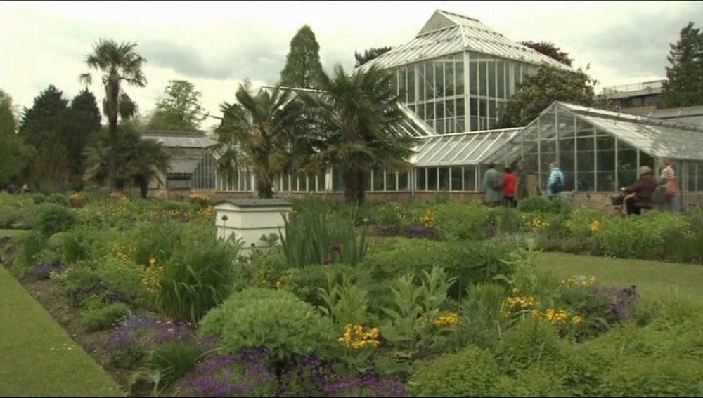 ¿Un jardín para alérgicos? Es posible