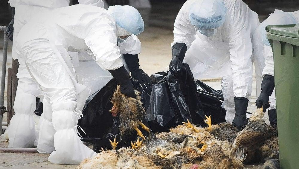 Hong Kong en alerta por la Gripe A
