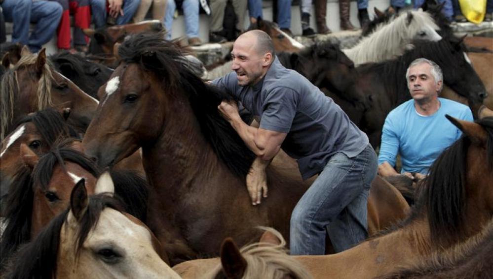 Hombres y caballos retan sus fuerzas en la Rapa das Bestas