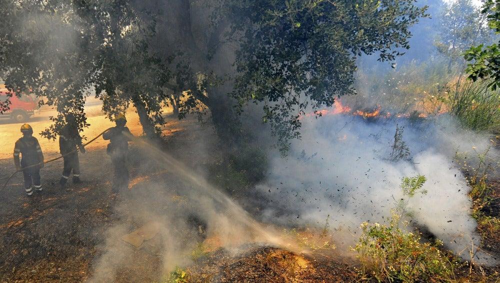 Las llamas avanzan con intensidad durante un incendio