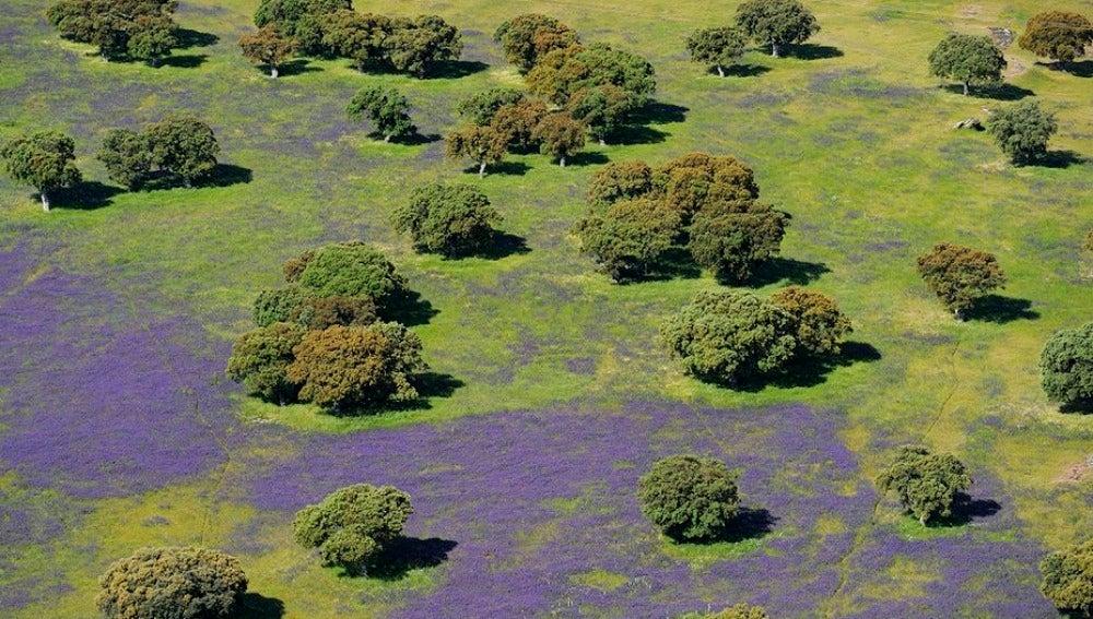 Reserva natural de Doñana
