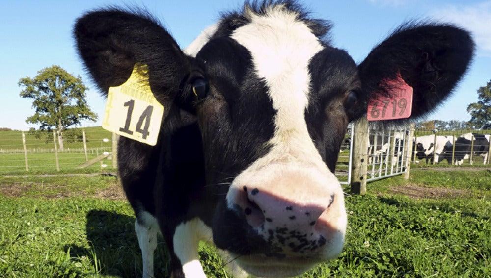 Daisy, la esperanza para los bebés alérgicos a la leche