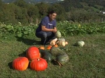 el briconsejo de jardinera - Bricomania Jardineria